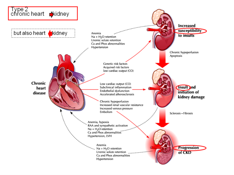 acute cardiovascular responses to different types Stress management can be complicated and confusing because there are different types of stress — acute stress rapid heartbeat, sweaty palms, heart palpitations.