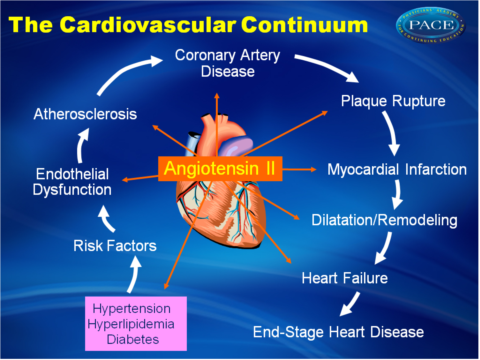 The Renin Angiotensin System Pace Cme
